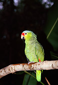 BRD 01 JM0001 01