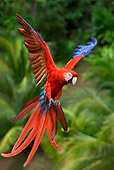 BRD 01 KH0003 01