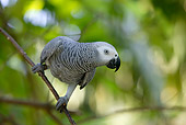 BRD 01 KH0009 01
