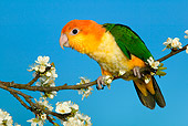 BRD 01 KH0014 01