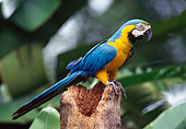 BRD 01 KH0022 01