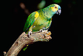 BRD 01 LS0007 01