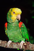 BRD 01 LS0008 01