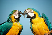 BRD 01 RC0024 01