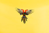 BRD 01 RK0025 17