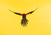 BRD 01 RK0025 28