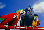 BRD 01 RK0074 32