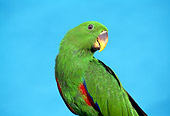 BRD 01 TK0001 01