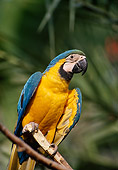 BRD 01 TL0005 01
