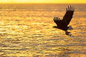 BRD 02 AC0016 01