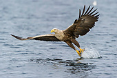 BRD 02 AC0020 01