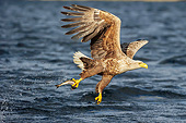 BRD 02 AC0022 01