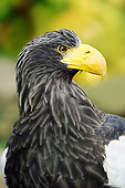 BRD 02 AC0028 01