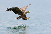 BRD 02 AC0033 01