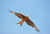 BRD 02 GL0005 01