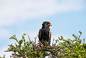 BRD 02 GL0010 01