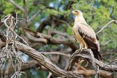 BRD 02 HP0002 01