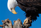 BRD 02 MC0003 01
