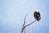 BRD 02 MC0004 01