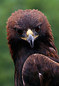 BRD 02 MC0005 01