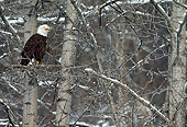 BRD 02 MC0006 01