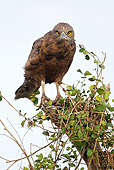 BRD 02 MC0008 01