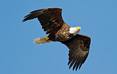 BRD 02 MC0014 01