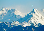 BRD 02 NE0031 01