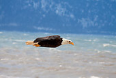 BRD 02 RW0006 01