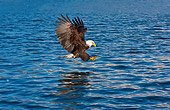 BRD 02 RW0007 01