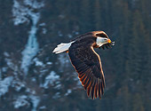 BRD 02 RW0010 01