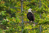 BRD 02 TK0001 01