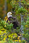 BRD 02 TK0002 01