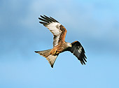 BRD 02 WF0001 01