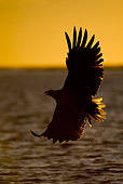 BRD 02 WF0006 01