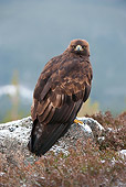 BRD 02 WF0008 01