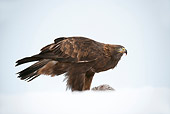 BRD 02 WF0009 01