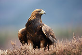 BRD 02 WF0016 01