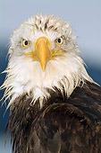 BRD 02 JM0002 01