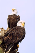 BRD 02 JM0003 01