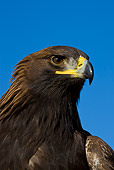 BRD 02 KH0005 01
