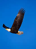 BRD 02 NE0001 01