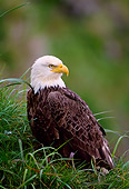 BRD 02 NE0005 01