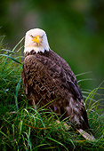 BRD 02 NE0006 01