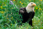 BRD 02 NE0007 01