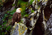 BRD 02 NE0009 01