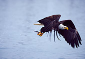 BRD 02 NE0010 01