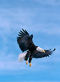 BRD 02 NE0013 01