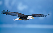 BRD 02 NE0014 01
