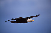 BRD 02 RF0089 01
